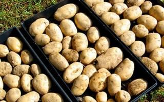 Как быстро перебрать картофель