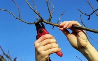 Как обрезать абрикос летом схема