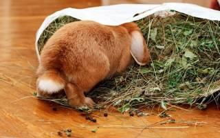 Как правильно кормить кролика