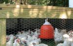 Как построить кормушку для кур