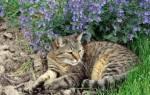 Как избавиться от кошек на участке самый эффективный способ