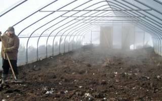 Как обработать теплицу от фитофторы на зиму