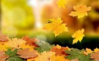 Из за чего желтеют листья на деревьях