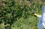 Как обрабатывать деревья медным купоросом осенью