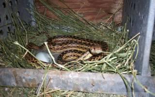 Как от дома отпугнуть змей