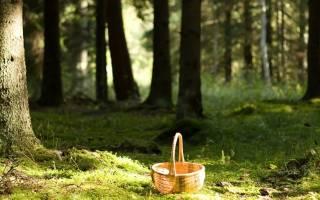 В лес за грибами или в лес по грибы