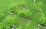 Как на участке разместить деревья на