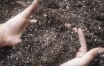 Как обеззаразить землю марганцовкой