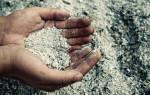 Как вносить золу в почву