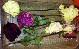 Как засушить красиво розы