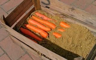 Как подготовить морковь к хранению в погребе