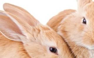 В каком возрасте покрывают крольчиху