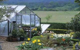 Как выращивать клюкву в саду